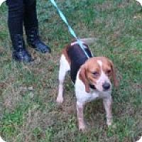 Adopt A Pet :: Aurora - Dumfries, VA