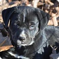 Adopt A Pet :: Felipe - Crocker, MO