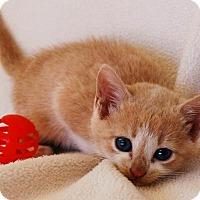 Adopt A Pet :: Frontier - Toccoa, GA