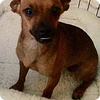 Adopt A Pet :: Dolly - Fort Pierce, FL