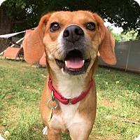 Adopt A Pet :: Harmony - Washington, DC
