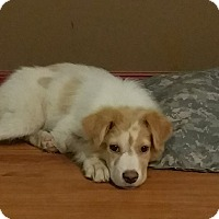 Adopt A Pet :: Kiwi -Adopted! - Ascutney, VT