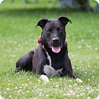 Adopt A Pet :: Kato - Washoe Valley, NV