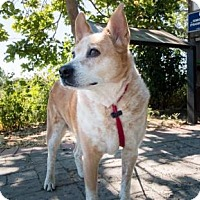 Adopt A Pet :: Kali - San Francisco, CA