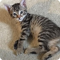 Adopt A Pet :: Runa - Tallahassee, FL