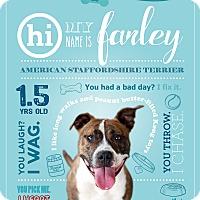 Adopt A Pet :: Farley - Jacksonville, FL