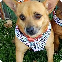 Adopt A Pet :: June - Andalusia, PA