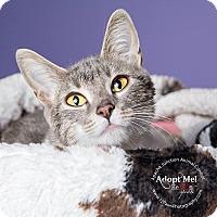 Adopt A Pet :: Lola - Apache Junction, AZ