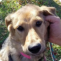 Adopt A Pet :: Myra *Adoption Pending* - Fairfax, VA