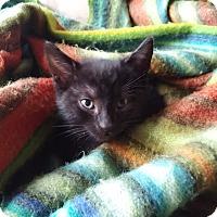 Adopt A Pet :: Jason Stackhouse - Toronto, ON