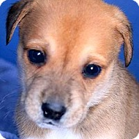 Adopt A Pet :: CURRY(OUR