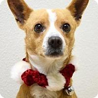 Adopt A Pet :: Graham Cracker - Dublin, CA