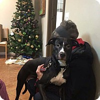 Adopt A Pet :: Sadie - Port Clinton, OH