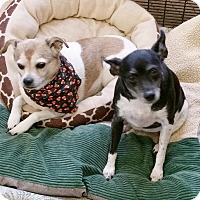 Adopt A Pet :: Maggie - Urbana, OH