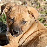 Adopt A Pet :: Cecil - Glastonbury, CT
