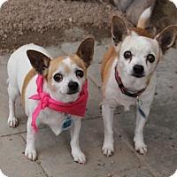 Adopt A Pet :: Ethel - Phoenix, AZ