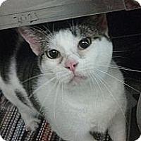 Adopt A Pet :: Linx - Tampa, FL