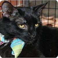 Adopt A Pet :: Evan - New York, NY