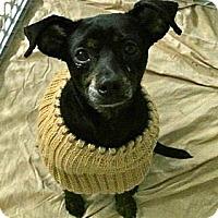 Adopt A Pet :: Gabriel - Minneapolis, MN