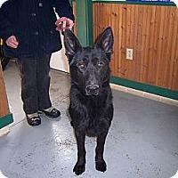 Adopt A Pet :: RASCAL - Tully, NY