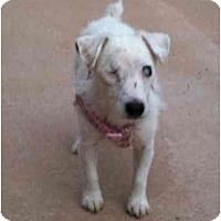 Adopt A Pet :: Bia - Seymour, CT