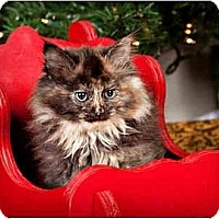Adopt A Pet :: Banjo - Owensboro, KY