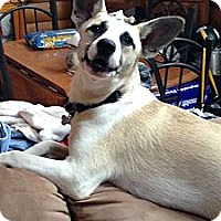 Adopt A Pet :: Bandit - Morgantown, WV