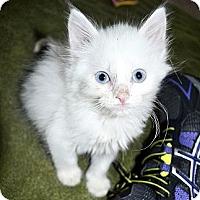 Adopt A Pet :: Aiden - Xenia, OH