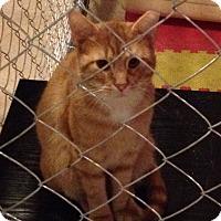 Adopt A Pet :: Winki - Acme, PA