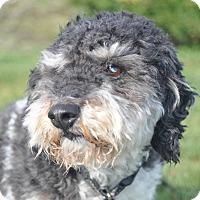 Adopt A Pet :: Percy - Tumwater, WA