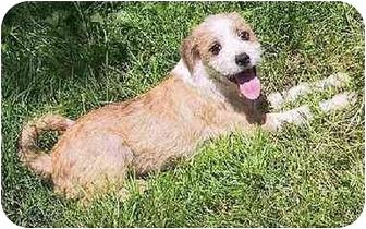 Mountain Home Arkansas Dog Rescue