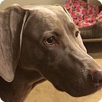 Adopt A Pet :: Barley - Grand Haven, MI