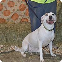 Adopt A Pet :: Aspen - Lima, OH
