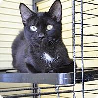 Adopt A Pet :: Monroe - Brooklyn, NY