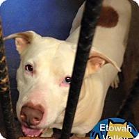 Adopt A Pet :: Casper - Boston, MA