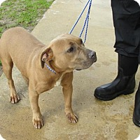 Adopt A Pet :: Evelyn - Rocky Mount, NC
