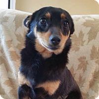Adopt A Pet :: Ceasar - Nashville, TN
