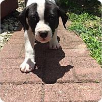 Adopt A Pet :: Cash - Windermere, FL