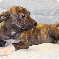 Adopt A Pet :: Natalie - Modesto, CA