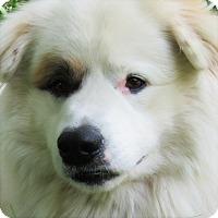 Adopt A Pet :: Petey - Kyle, TX