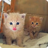 Adopt A Pet :: Ally & Allyssa - Marlton, NJ