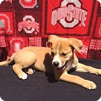 Adopt A Pet :: Sinatra - East Sparta, OH