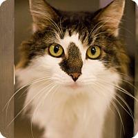 Adopt A Pet :: Yoda - Grayslake, IL