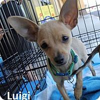 Adopt A Pet :: Luigi - Lake Forest, CA