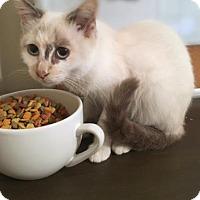 Adopt A Pet :: Caliope - Wichita, KS