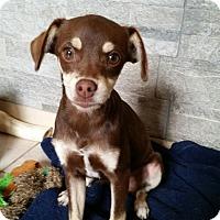 Adopt A Pet :: Theodore - Brea, CA