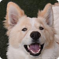Adopt A Pet :: Quigley - Burlingame, CA