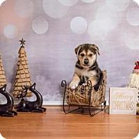 Adopt A Pet :: Logan - Carrollton, TX