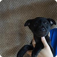 Adopt A Pet :: Tizz - Oviedo, FL