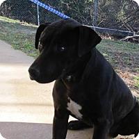 Adopt A Pet :: Alex - Rocky Mount, NC